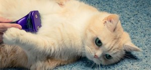 What are the Most Common Feline Skin Conditions?