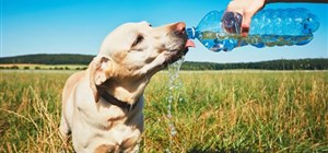 Keep Your Pets Safe in the Summer Heat