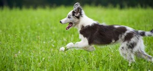 Spring Safety for Your Pets
