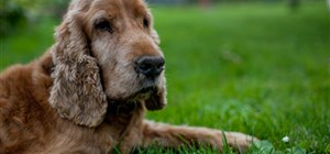 Help Your Dog Grow Old Gracefully: Watch Out for These Signs of Aging