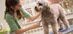 The Health Benefits of Keeping Your Pet Groomed