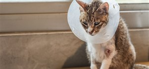 Everything You Should Know About Spaying and Neutering Your Pets