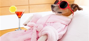 Keep Your New Puppy Healthy and Happy with These Puppy Grooming Tips