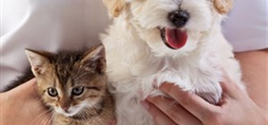 Spaying and Neutering Does More Than Prevent Unwanted Litters