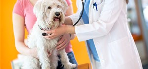 Why Your Dog Needs Heartworm Treatment