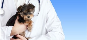 First Step: Veterinary Care for Your New Puppy