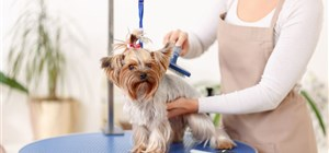 What Causes Matted Hair in Dogs (and How to Treat It)?