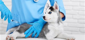 Does My Dog Need a Canine Influenza Vaccination?