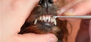 How Your Pet's Oral Health Affects Their Overall Health