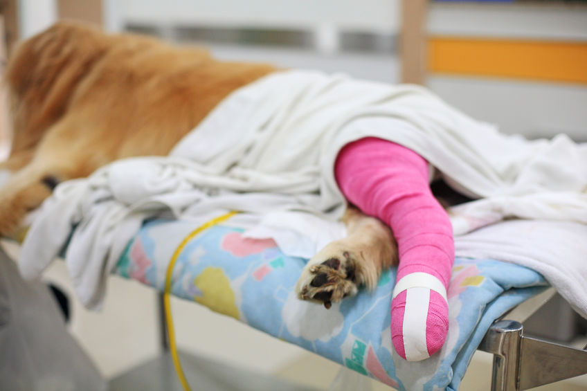 What You Should Know About Orthopedic Pet Surgery