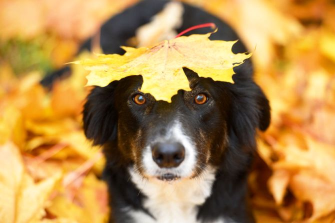Keeping Your Pets Safe this Fall