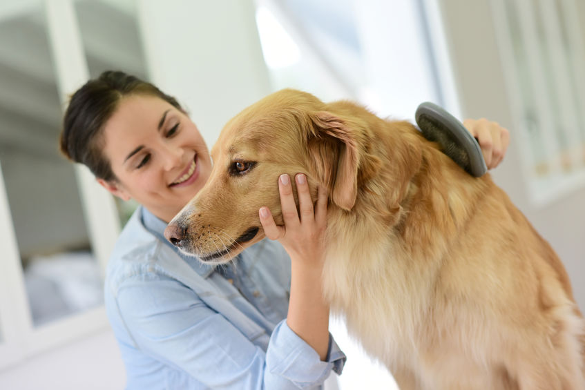 The Importance of Regular Grooming for Dogs