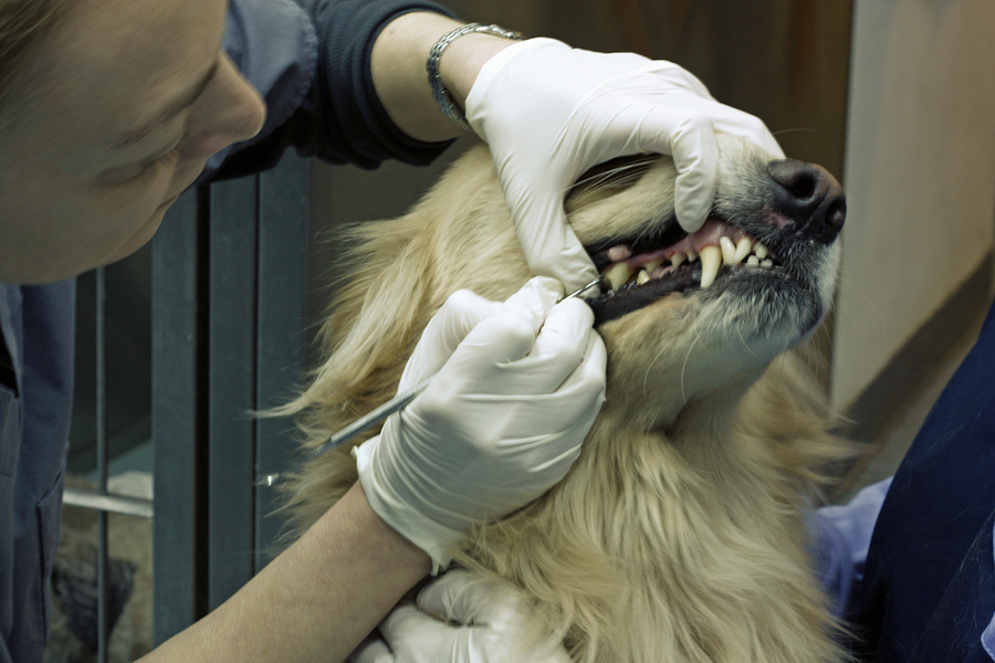 Caring for Your Dog's Teeth