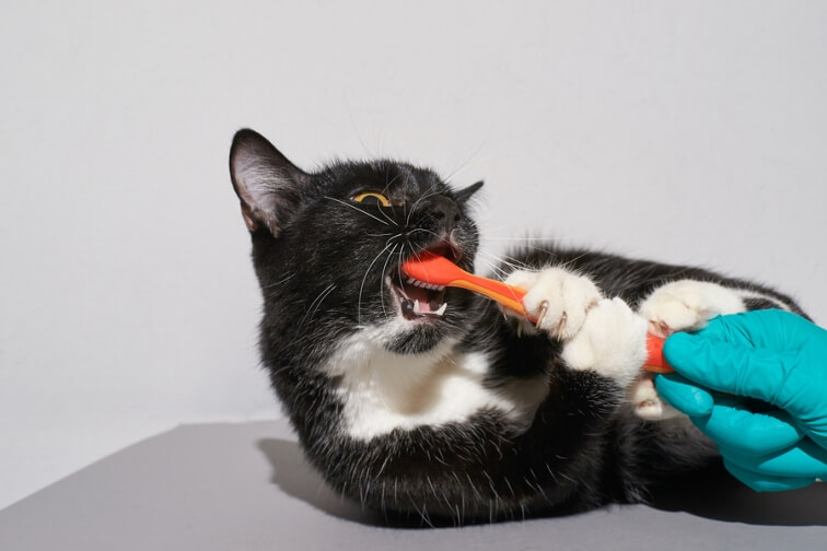 Pet Oral Care Matters