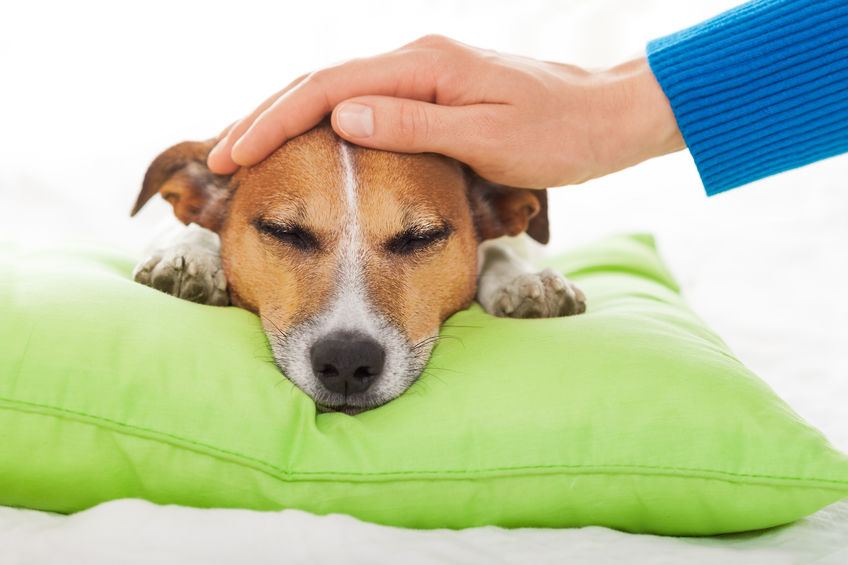 Five Heartworm Symptoms to Look Out For