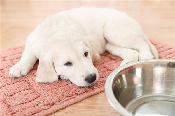 Tips for Potty-Training your Puppy