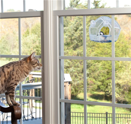 Indoor vs Outdoor Cats – What is best?