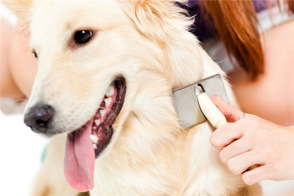 Skin Problems That May Be Bothering Your Dog