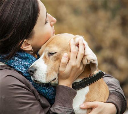 Why Your Pet is So Sad: A Guide to Dog Depression