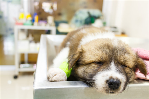 Six Signs Your Pet May Need a Trip to the Emergency Room