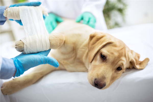 What Should You Do If Your Pet Breaks a Bone?