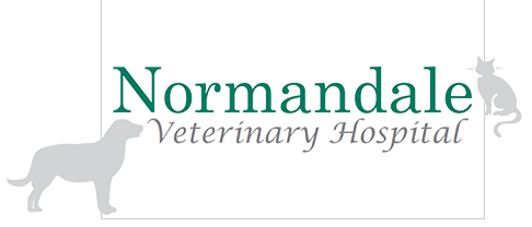 Pet Hospital & Vet Clinic | Normandale Veterinary Hospital ...